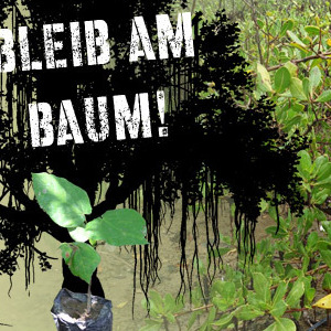 Bleib am Baum Newsletter 12/20019